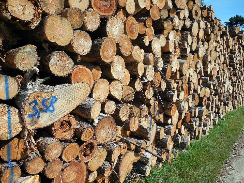 Buy and Sell Wood Forestry